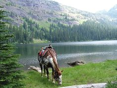 Swan Mountain Wilderness Riding and Fly Fishing Adventure at Triple Creek Ranch.