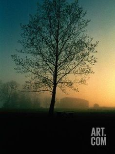 Misty Twilight View of a Silhouetted Tree Photographic Print by Sam Abell at Art.com
