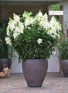 Asiaterrasse - XXL Pflanzen