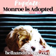 Pupdate: Monroe is Adopted