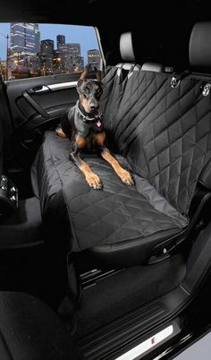 10 Useful Car Accessories for Road-Tripping with Your Pooch. Dog lovers you NEED to see this...