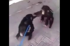WATCH: 2 Monkeys Who Are Brothers Were Reunited in the Most Adorable Way [Aww Cute LOL]