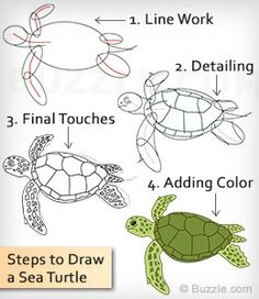 Want to draw a sea turtle? It is not as difficult as it may seem. Sea turtles are quite different from regular turtles or tortoises but are very easy to draw. Learn to draw a sea turtle as per the instructions given here. Sea Turtle Painting, Sea Turtle Art, Turtle Love, Sea Turtles, How To Draw Turtle, How To Draw Fish, Ocean Art, Drawing Techniques, Drawing Tips