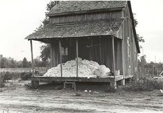 Cotton on porch of sharecropper's home, Maria plantation, Ar...
