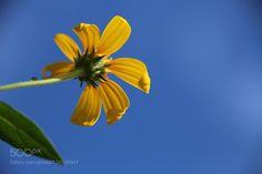 Flower by 305931252 #nature #photooftheday #amazing #picoftheday