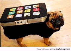 Pug Dog Funny Pictures Quotes Photos Images
