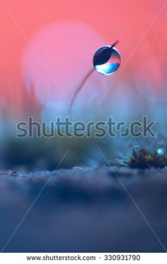 Single dew drop on a moss with red background/Red and blue/Single dew drop - stock photo