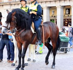 Lovely baroque police horses in Europe.  Wow! Gorgeous!