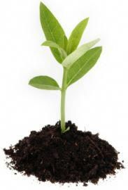 c8bbfd7b1ae9 SAVE MONEY MAKING YOUR OWN ORGANIC SOIL...How To Sterilize Soil  amp