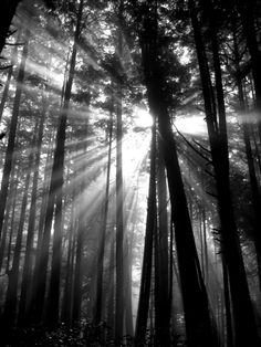 Woods- West Coast Trail