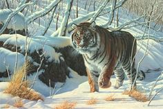 wildlife art - Google Search
