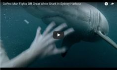 GoPro: Man Fights Off Great White Shark In Sydney Harbou