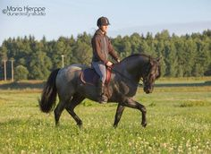 Dressage and trot with Black Pepper