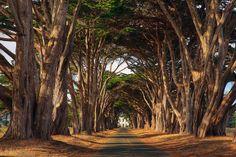 Tunnel: Point Reyes National Seashore by KP Tripathi (kps-photo.com), via Flickr