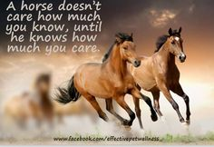 A horse doesn't care how much you know