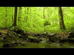 Sonidos del bosque para dormir Relajacion Nature Sounds, Relax and meditation, 自然音、リラックス、瞑想 🌳 Relaxing Rain Sounds, Rain Sounds For Sleeping, Relaxing Gif, Relaxing Music, Sounds Of Birds, Nature Sounds, Deep Meditation, Meditation Music, Music Bird