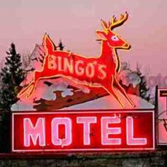 Bingo's Motel Neon Sign