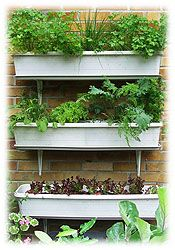 Container & Small Space Gardening Product Recommendations