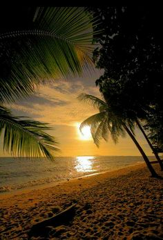 Travel Discover sunrise on the beach under the palm trees Beautiful Sunset Beautiful Beaches Beautiful World Beautiful Morning Simply Beautiful Beautiful Things The Beach Beach Walk Beach Girls Beautiful Sunset, Beautiful Beaches, Beautiful World, Beautiful Morning, Simply Beautiful, Beautiful Things, Beautiful Beautiful, Jolie Photo, Beach Scenes