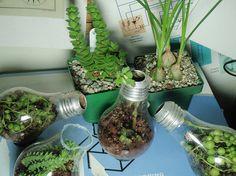 Incandescent light bulbs as planters