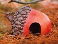 Acorn Toad Home