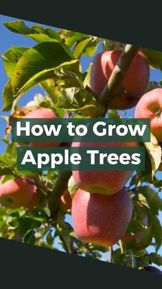 There are many fruits and berries that grow nicely in containers. If your garden space is limited or you have poor soil quality, container growing is an excellent option. Planting Apple Trees, Planting Roses, Planting Vegetables, Planting Seeds, Pruning Hydrangeas, Vegetable Gardening, Vegetable Garden For Beginners, Gardening For Beginners, Gardening Tips