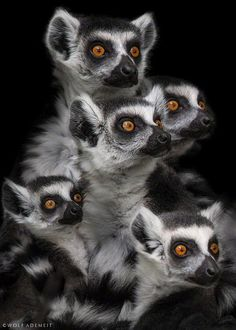 Family of five. #animals