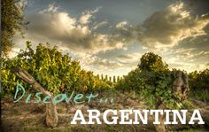 Discover... Argentina www.bcfw.co.uk Wine Merchant, North Yorkshire, Worship, Vineyard, Wineries, World, City, Places, Sunday