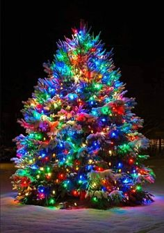 classic christmas trees Happy New Year Christmas Scenery, Beautiful Christmas Trees, Christmas Mood, Noel Christmas, Outdoor Christmas, Christmas Pictures, Christmas Themes, Christmas Tree Decorations, Vintage Christmas Lights
