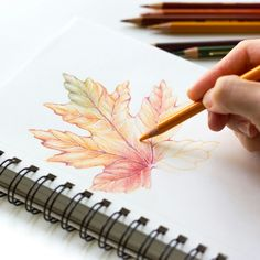Colored pencil drawing using Prismacolor colored pencils.| Fall leaf | Lauren Runyan Designs @www.mybeautifuleveryday.com