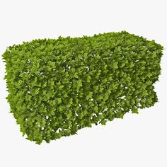 model: This Rectangular Box Hedge is a high quality model that will enhance detail and realism to your rendering projects. The model has a fully textured design that allows for close-up renders, . Planting Shrubs, Planting Vegetables, Plant Images, Nature Images, Landscape Architecture, Landscape Design, Desert Landscape, Tree Psd, Box Hedging