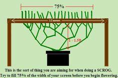 SCROG Vegging Diagram