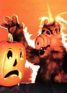 alf with a pumpkin - Alf Halloween Episode
