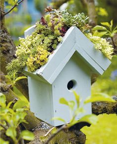 I love this simple bird house under cover of nature's blossoms and boughs.
