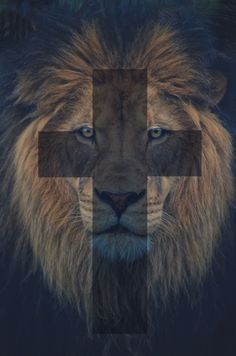 """The wicked flee though no one pursues, but the righteous are as bold as a lion.""  -Proverbs 28:1"