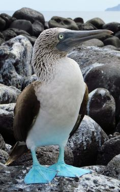 Biodiversity Camp for High Schoolers in the Galapagos Islands | Broadreach
