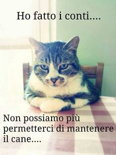 Vignette con i Gatti per Whatsapp - IMG I Love Cats, Cute Cats, Funny Cats, Animals And Pets, Funny Animals, Cute Animals, Funny Photos, Funny Images, Italian Memes