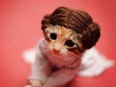 Kitten dressed as Princess Leia from Star Wars (© REX/Wendy McKee)