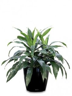 Everything from mattresses to pots/pans to kids' pajamas can put harmful chemicals into indoor air. It's best to clean indoor toxins in any way possible Natural Air Purifier, Indoor Plant Pots, Potted Plants, Beauty And The Best, Plant Guide, Green Life, How To Stay Healthy, Healthy Tips, Houseplants