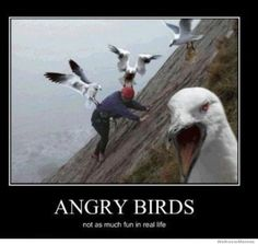 Angry Birds... not as fun in real life