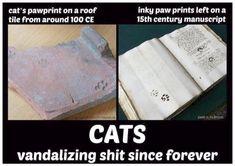Neat >> Funny Cat Photos Tumblr #nice