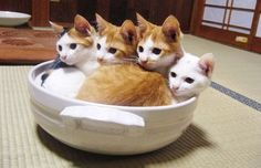 harperhug:devildoll:Step 12: Place uncovered bowl of kittens in a warm place until they rise, about 30 min.