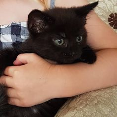 Meet Buttons! Our new little kitten! If you wonder why he has been named Buttons pop over to @unique.gifts.buttons! . . . . . .…