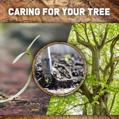 Brands tree felling we provide a professional and reliable service supported by specialized experienced and well trained personnel.