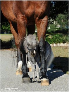 miniature horse!