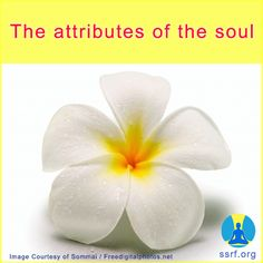 The attributes of the soul  By engaging in spiritual practice, we gradually dissolve our five senses, mind, and intellect. As a result, we identify ourselves with our soul instead. Why would we want to do this?  The soul is the God principle within us and is our true nature. In fact, the attributes or qualities of the soul are Absolute Truth, Divine Knowledge or Consciousness, and Bliss. Hence, when we are able to perceive the soul, we begin to experience Bliss from it. Bliss is a…