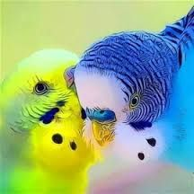 Lovely painting of budgies. I miss my old budgies. Such sweet pets. Cute Birds, Pretty Birds, Beautiful Birds, Animals Beautiful, Parrot Wallpaper, Hd Wallpaper, Animals And Pets, Cute Animals, Australian Parrots