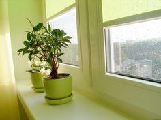 Как ухаживать за комнатными растениями в холодное время года 0