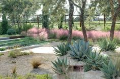 Blue agave and pink muhly - Decoist