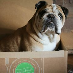 Big congrats to @thebulldogtuna on Instagram for winning this week's #HelloFreshPics challenge. Tuna, you look amazing in our HelloFresh box!  Please email communityteam@hellofresh.com to claim your prize! A big thank you to all the pet participants, we've seen some really cute pictures this week!   Next week we will select our favorite food pic again! Be sure to tag your kitchen creations with #HelloFreshPics on Facebook, Instagram, and Twitter for a chance to win! #HelloFreshWins Hello Fresh Box, Facebook Instagram, Instagram Posts, Tuna, Cute Pictures, Challenges, Pets, Twitter, Big